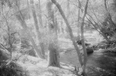 fad studios photography - Dream Forest